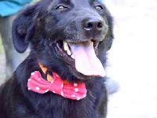,Radovan pokojný priateľský a vďačný psík kríženec