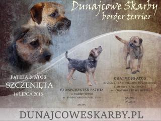 ,šteňatá border terier z Poľska