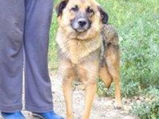 ,Bea prekrásna fenočka rodinný psík nemecký ovčiak