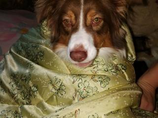 ,Opatrovanie psíkov
