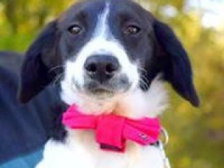 ,Fifi perfektný rodinný psíček kríženec