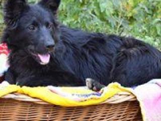 ,Máša čierna kráska hravé šteniatko kríženec