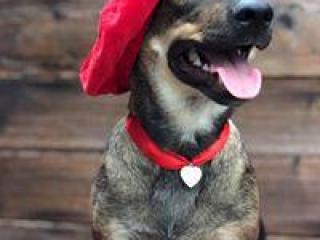 ,Arthur priateľský a hravý psíček kríženec