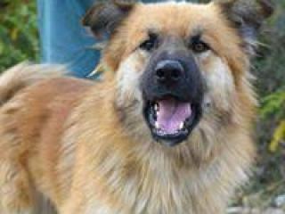 ,Mambo aktívny rodinný psíček kríženec