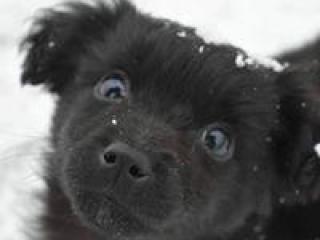 ,Alan krásne čierne hravé šteniatko kríženec