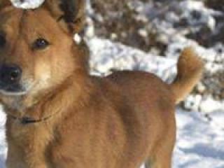 ,Taras malý a milý rodinný psíček kríženec