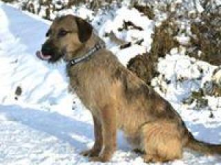 ,Toby Lincoln priateľský aktívny rodinný psíček kríženec