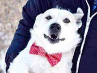,Falko psík zlatíčko do dobrej rodiny kríženec