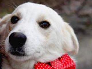 ,Kamio veľmi dobrý psík do milujúcej rodiny kríženec