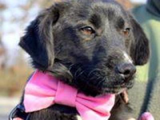 ,Lola milunké šteniatko do milujúcej rodiny kríženec