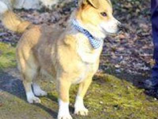 ,Malik malinký psík s obrovským srdcom do dobrej rodiny