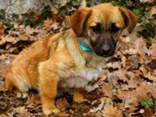 ,Azorko milučký psíček do dobrej rodiny