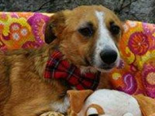 ,Boris milučký psíček do dobrej rodiny