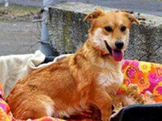 ,Ondrej hravý milučký psíček do dobrej rodiny