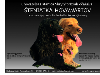 ,ŠTENIATKA HOVAWARTA S PP