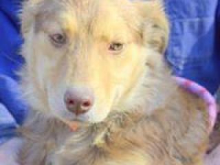 ,Chessie prekrásne hravé šteniatko kríženec