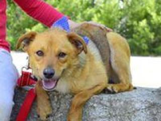 ,Fedor úžasný spoločenský psíček kríženec