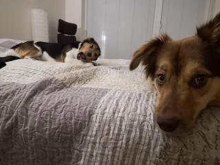 ,Hľadám opatrovanie pre 2 psikov počas dovolenky