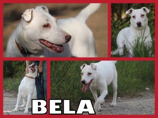 ,BELA hľadá domov