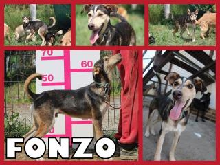 ,FONZO hľadá domov