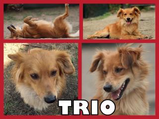 ,TRIOS hľadá domov