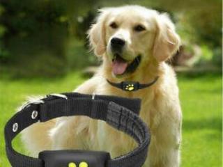 ,GPS lokalizačný obojok pre psa