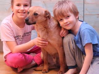 ,Pedro - ročný psík malého vzrastu (8 kg)