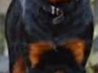 ,Strážny pes