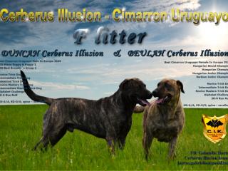 ,Uruguajský Cimarron (cimarron uruguayo) s PP