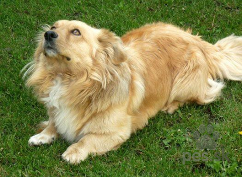 Neuznané plemená a krížence,Darujem psíka z rodinných dovodov...