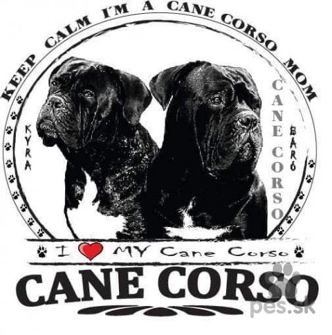 Pinče, bradáče, molosoidy a švajčiarske salašnícke psy,Šteniatka Cane Corso na predaj
