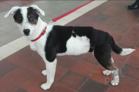 f1d627cf0 Darujem šteniatko - Darujem psa KRÍŽENEC | Pes.sk