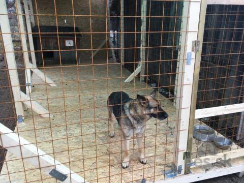 Ovčiaky a pastierske psy,hľadáme nových milujúcich majitelov