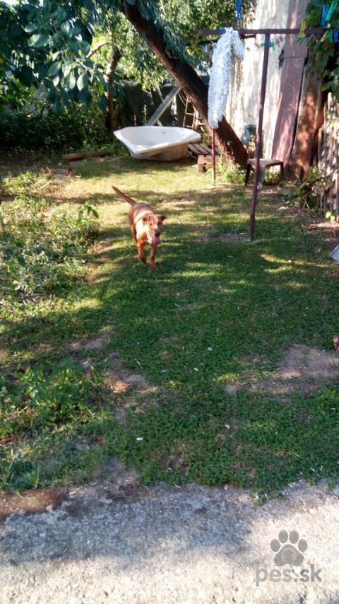 Neuznané plemená a krížence,Darujem psíka-fenku