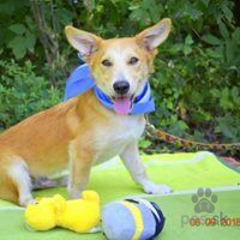Neuznané plemená a krížence,Bigli ideálny rodinný hravý psíček kríženec