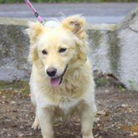 Neuznané plemená a krížence,Domingo perfektný psíček do dobrej rodiny