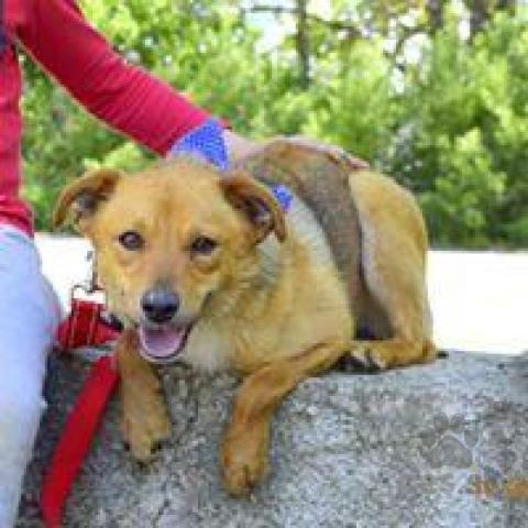 Neuznané plemená a krížence,Fedor úžasný spoločenský psíček kríženec