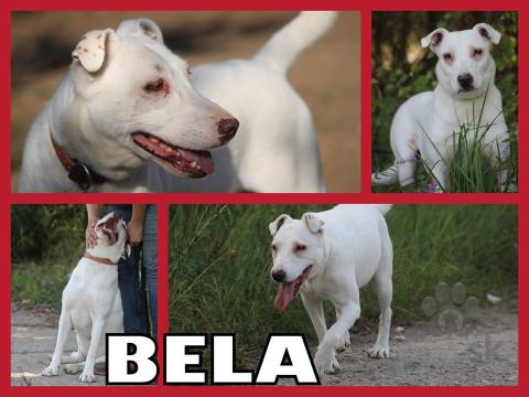 Neuznané plemená a krížence,BELA hľadá domov