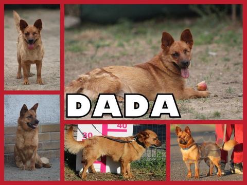 Neuznané plemená a krížence,DADA hľadá domov