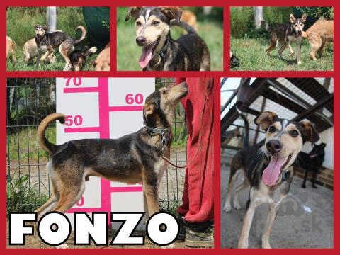 Neuznané plemená a krížence,FONZO hľadá domov