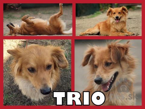 Neuznané plemená a krížence,TRIOS hľadá domov
