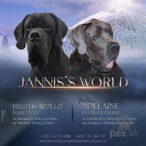 Pinče, bradáče, molosoidy a švajčiarske salašnícke psy,Německá doga modrá a černá s PP