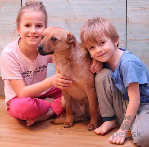 Neuznané plemená a krížence,Pedro - ročný psík malého vzrastu (8 kg)