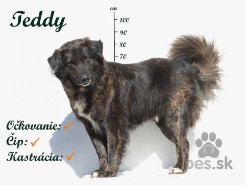 Neuznané plemená a krížence,Teddy - vzbudzuje rešpekt, je to však milý macko, ktorý by určite aj postrážil