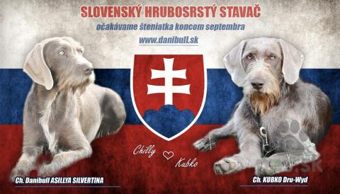Stavače,Slovenský hrubosrstý stavač