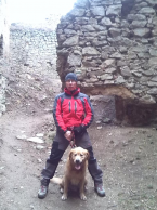 , Zlaty retriever