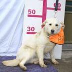 ,DANIEL milučký psíček mix labrador