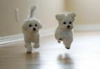 ,Opatrovanie psíka
