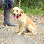 ,Sanny priateľský rodinný psíček kríženec