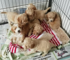 ,Roztomilé šteniatka pre adopciu